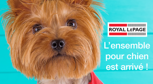 rlpN-rmhome-puppy-hero-image_fr (2)